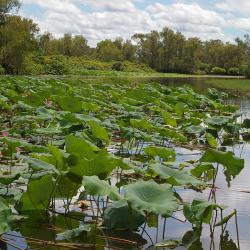 corroboree-billabong-wetlands