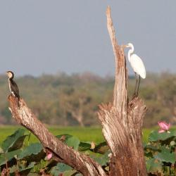 wetland-serenity