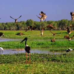 corroboree-billabong-birds
